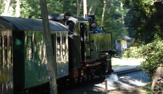 【ドレスデン近郊観光①】森の中を通るSL列車(レースニッツグルント鉄道)に乗って、モーリッツブルク城へ!